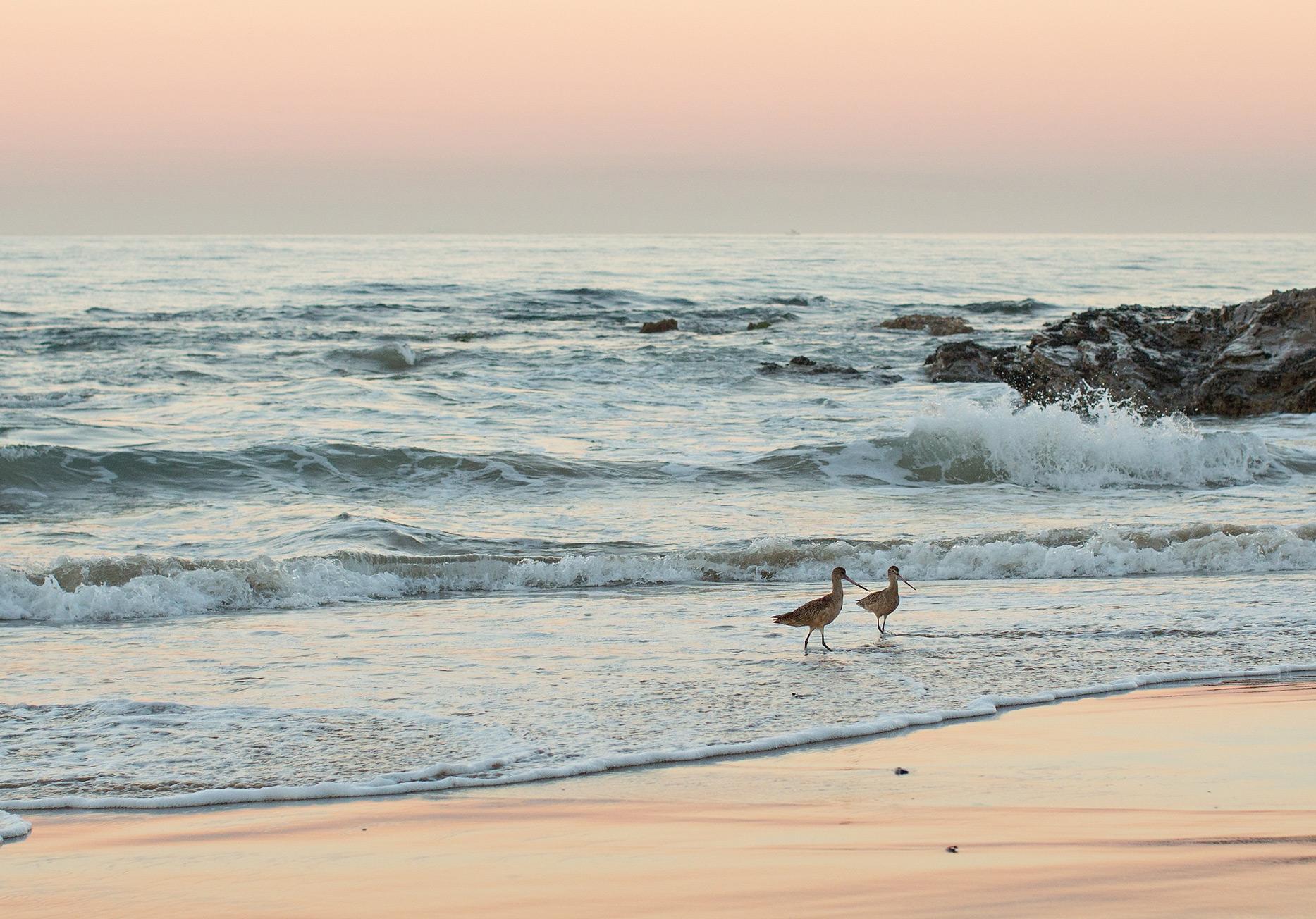 the elle in love, crystal cove, california, sunrise, beach