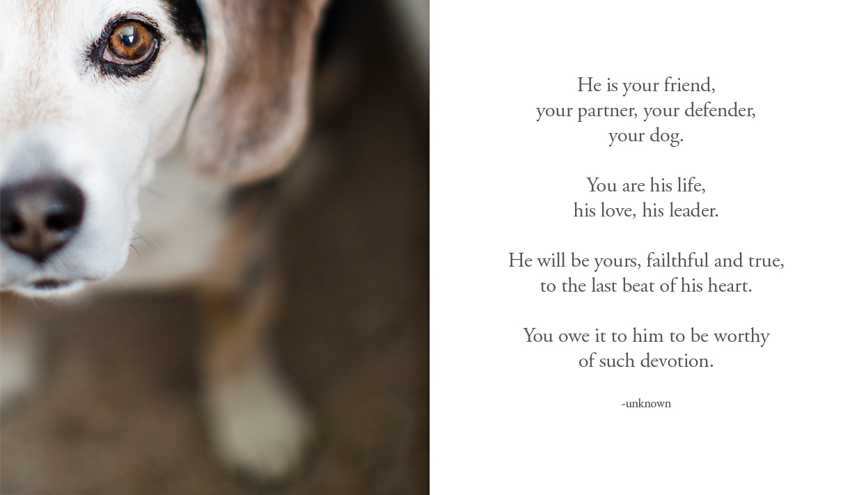 the elle in love a letter to my dog beagle mrsnifferson
